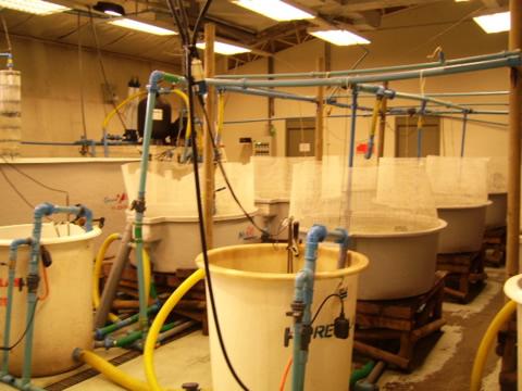Laboratorio de Biotecnología Acuícola